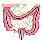Gastro Intestinal Endoscopy
